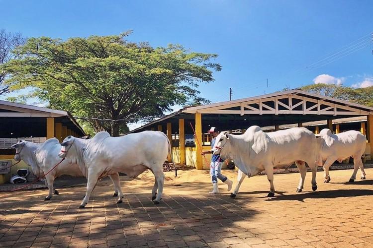 Exponel reúne mais de 250 animais na Emapa