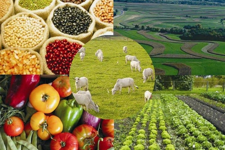 Prefeitura disponibiliza assessoria gratuita a produtores rurais