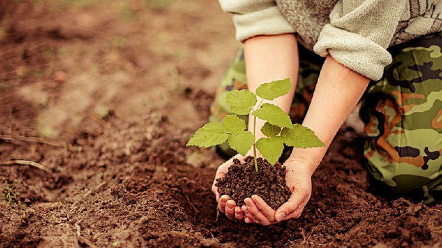 Emeb realizou atividades em prol do meio ambiente