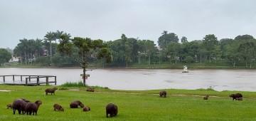 Secretaria reforça medidas para controle de carrapatos no Horto Florestal