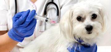 VISA promove a segunda etapa da Vacinação contra a Raiva
