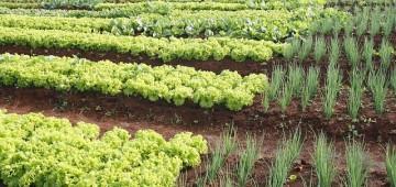Projeto da Secretaria da Agricultura alia capacitação e responsabilidade social