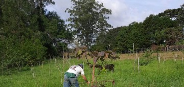 Nascente Modelo de Avaré passa por processo de restauração florestal