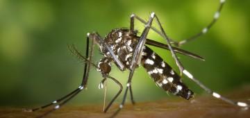 """Alerta à população sobre os riscos de picada do """"Mosquito da Dengue"""""""
