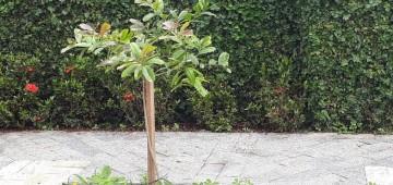 Meio Ambiente lança pesquisa sobre arborização urbana