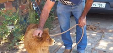 Secretaria atendeu mais de 200 ocorrências envolvendo animais