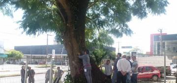 "Anunciado o corte da ""Árvore Delegada"""